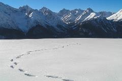 Footsteps in the snow at Motta Naluns