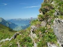 Lake Brienz seen from Planplatten