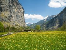 Bloemen in het Lauterbrunnental