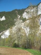 Voorjaar in de Rheinschlucht