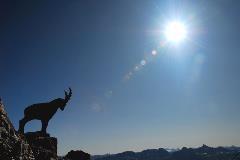 Standbeeld van een steenbok op Piz Nair