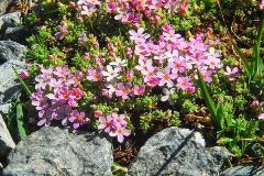 Bloemen in Val Champagna