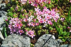 Flowers in Val Champagna