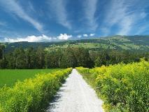 Walking path towards the Hinterrhein