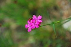Bloemen in het Geretal