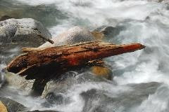 Tree trunk in the river Gerewasser