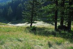 Bos bij Ulrichen
