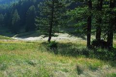 Forest near Ulrichen