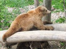 Bear Park in Bern