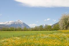 View of the Niesen from Unterseen