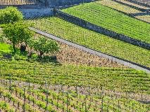 The Lavaux vineyards