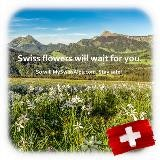 De Zwitserse bloemen zullen op u wachten