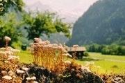 Lütschental - Grindelwald Grund