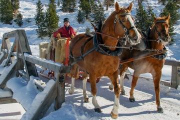 Horse-drawn sleigh in Val Roseg