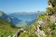 View over Lake Brienz from Planplatten