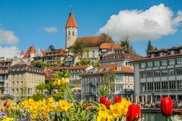 Bloemen langs de oever van de Aare in Thun