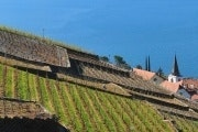 Lutry - Epesses (Lavaux vineyards)