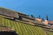 Lutry - Epesses (Lavaux-wijngaarden)