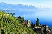 Toeristentreintje door de wijngaarden van Montreux