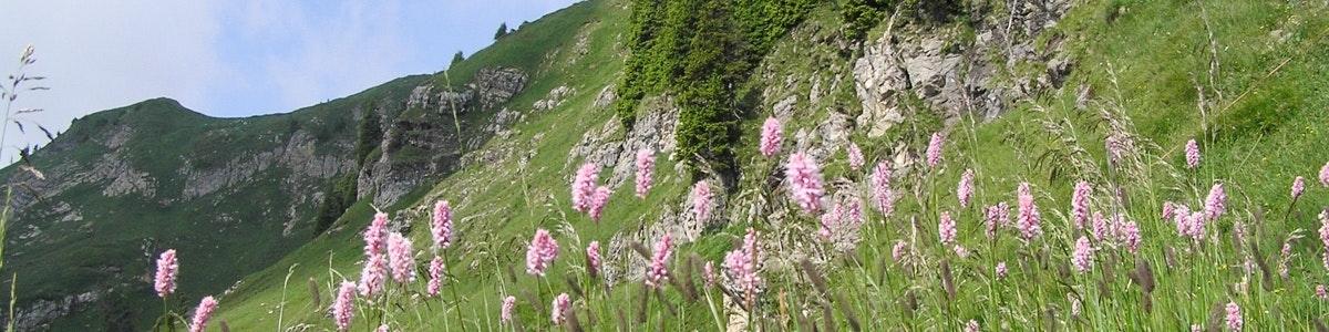 Bloemen bij Niederhorn