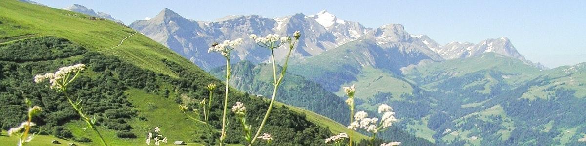 Blumenweg op Sillerenbühl