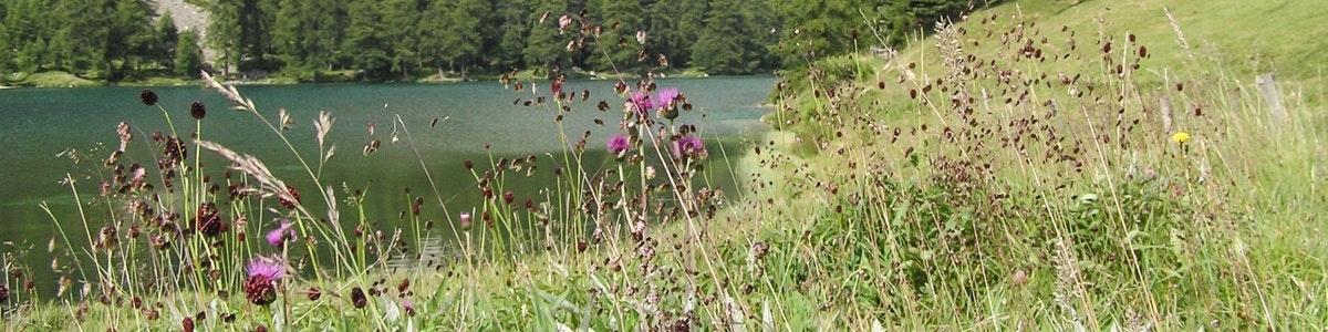 Bloemen langs het Lej de Palpuogna