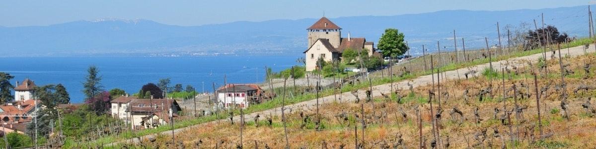 Wijngaarden Lutry Aran